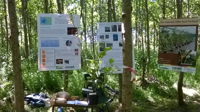 A demonstration in the woods to explain the unique physiology of alder. Teagasc open day June 2014.