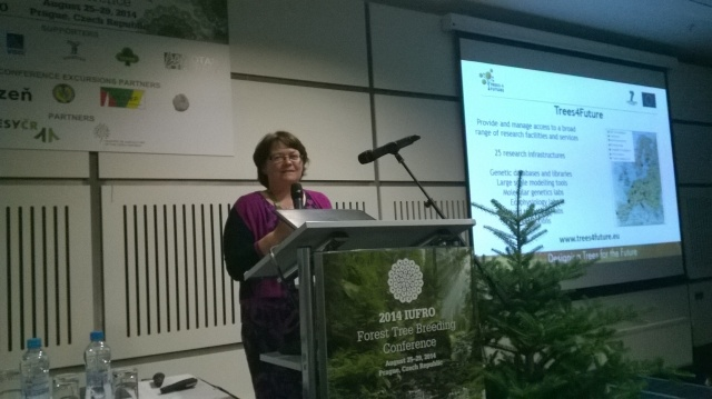 Speaking at the IUFRO Forest Tree Breeding 2014, Prague August 2014